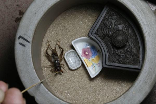 Muôn hình vạn trạng về lồng nhốt dế Trung Hoa cổ xưa: Những tạo tác tuyệt vời của nhân loại - ảnh 3