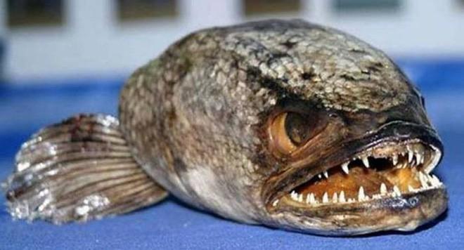 Điểm danh 10 loài cá có biệt tài săn mồi trên cạn trong thế giới tự nhiên - ảnh 12