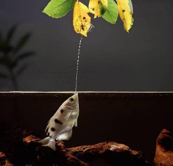 Điểm danh 10 loài cá có biệt tài săn mồi trên cạn trong thế giới tự nhiên - ảnh 3