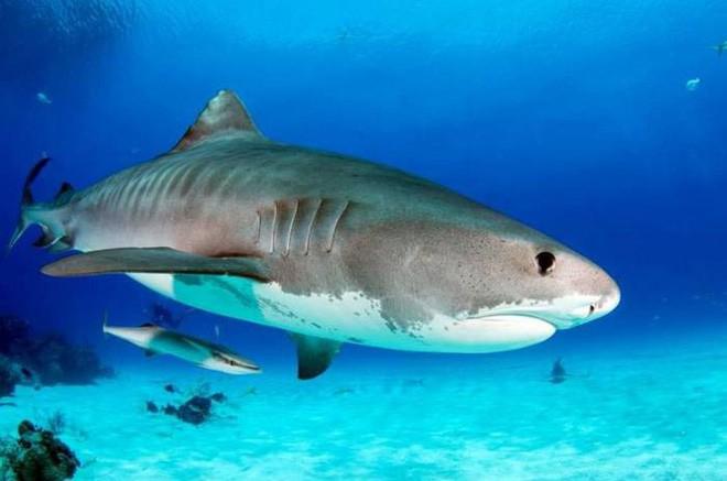 Điểm danh 10 loài cá có biệt tài săn mồi trên cạn trong thế giới tự nhiên - ảnh 6