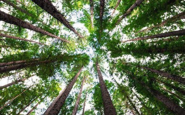 Trái Đất vẫn còn chỗ cho 1 nghìn tỷ cây xanh, nếu trồng đủ chúng ta sẽ ngăn được biến đổi khí hậu - ảnh 1
