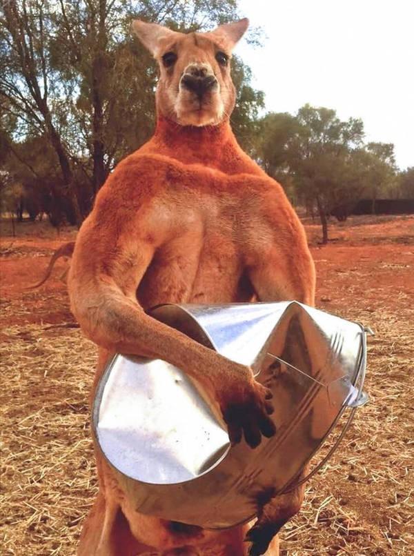 14 sự thật thú vị về tự nhiên mà thầy cô không dạy, sách vở chưa có: Kangaroo cái thích con đực cơ bắp, nhện chỉ giao phối một lần rồi tự cắt của quý! - ảnh 2