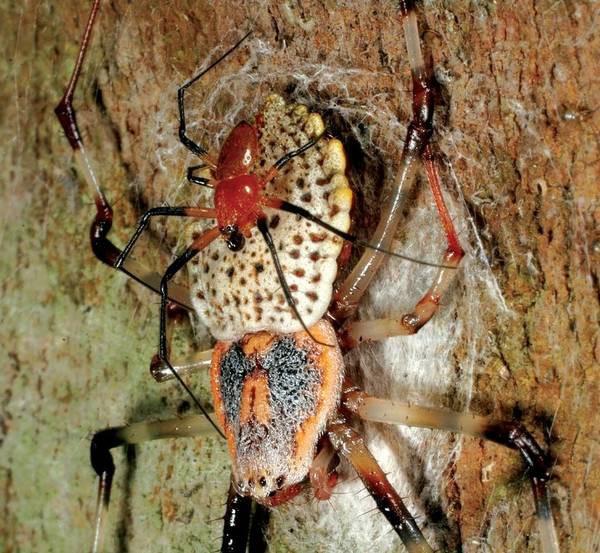 14 sự thật thú vị về tự nhiên mà thầy cô không dạy, sách vở chưa có: Kangaroo cái thích con đực cơ bắp, nhện chỉ giao phối một lần rồi tự cắt của quý! - ảnh 9