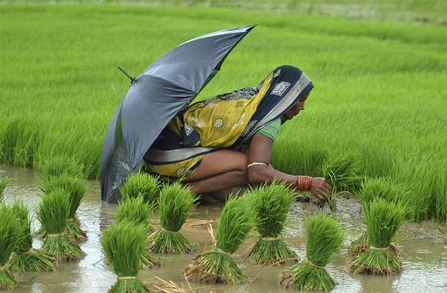Chấn động hàng loạt nữ nông dân Ấn Độ triệt sản ở độ tuổi 20 - ảnh 1