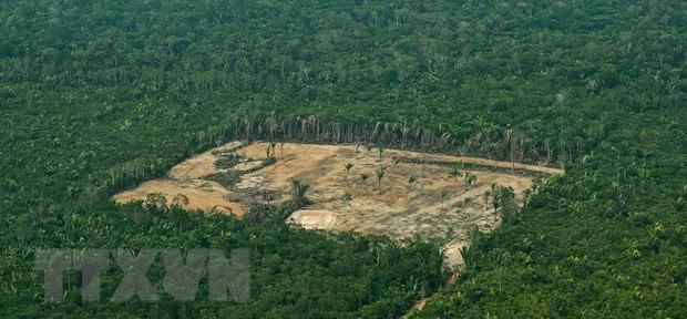 'Lá phổi xanh' Amazon bị tàn phá ở mức báo động - ảnh 1