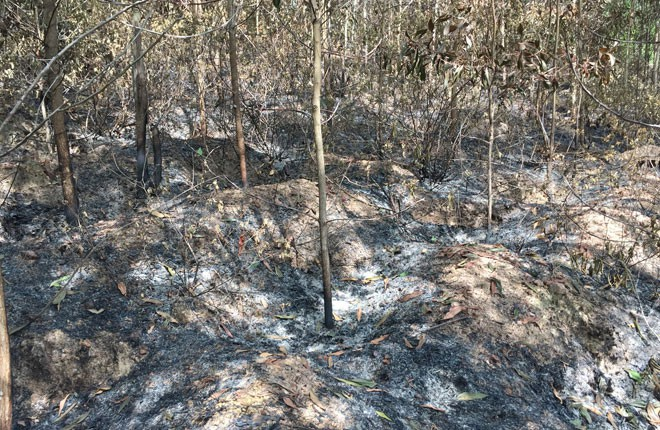 Tạm giam thanh niên đốt hơn 8.000m2 rừng cho vui - ảnh 1