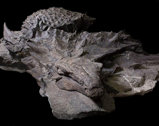 Xác ướp khủng long được bảo quản nguyên vẹn hơn 100 triệu năm có trọng lượng gần như tương tự lúc còn sống - ảnh 1