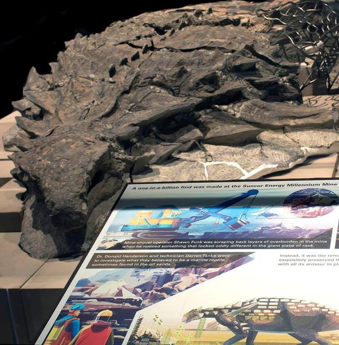 Xác ướp khủng long được bảo quản nguyên vẹn hơn 100 triệu năm có trọng lượng gần như tương tự lúc còn sống - ảnh 3