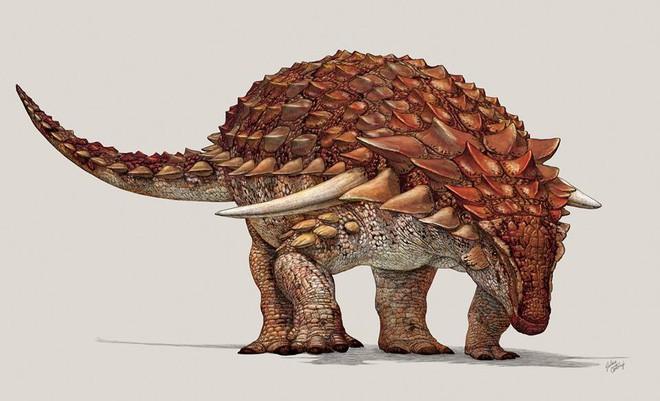 Xác ướp khủng long được bảo quản nguyên vẹn hơn 100 triệu năm có trọng lượng gần như tương tự lúc còn sống - ảnh 4