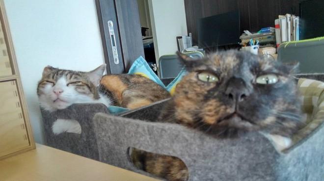 Chuyện lạ: Công ty công nghệ Nhật Bản trích hẳn một khoản bồi dưỡng tiền nuôi mèo cho nhân viên - ảnh 2