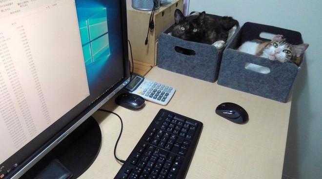 Chuyện lạ: Công ty công nghệ Nhật Bản trích hẳn một khoản bồi dưỡng tiền nuôi mèo cho nhân viên - ảnh 3