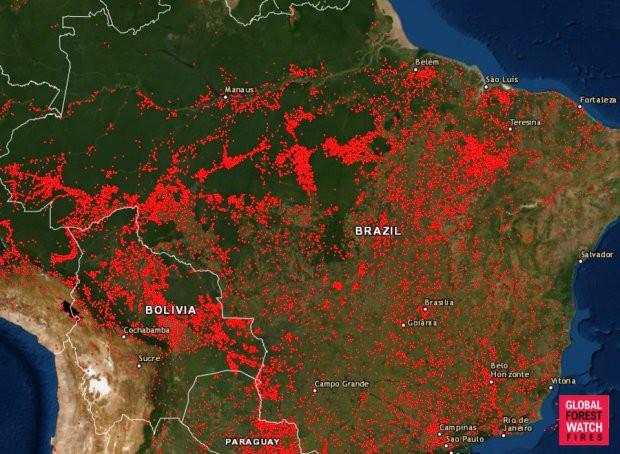 Thảm họa Amazon không còn là chuyện ở xa: Cư dân mạng thế giới và Việt Nam đồng loạt lên tiếng kêu gọi cứu lấy cánh rừng xanh - ảnh 1