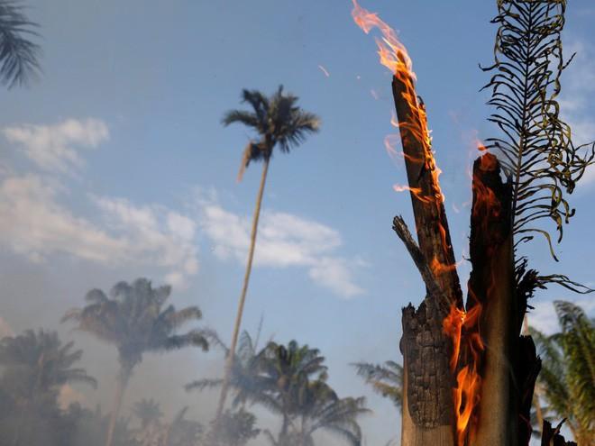 10% loài động vật trên hành tinh như sống trong hỏa ngục vì cháy rừng Amazon: Hậu quả kinh khủng hơn bất kì vụ cháy rừng nào khác - Ảnh 3.
