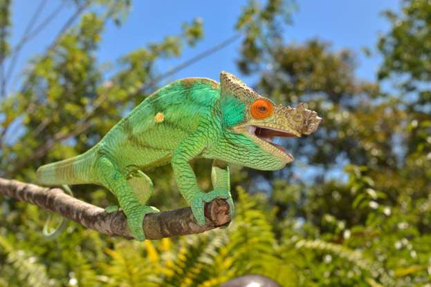 """Madagascar - """"Thiên đường"""" của những loài động vật kỳ lạ - ảnh 1"""