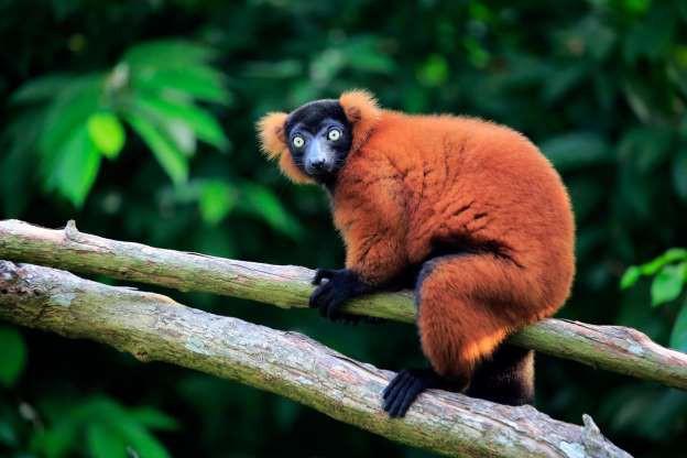 """Madagascar - """"Thiên đường"""" của những loài động vật kỳ lạ - ảnh 2"""