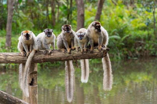 """Madagascar - """"Thiên đường"""" của những loài động vật kỳ lạ - ảnh 12"""