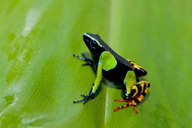 """Madagascar - """"Thiên đường"""" của những loài động vật kỳ lạ - ảnh 13"""