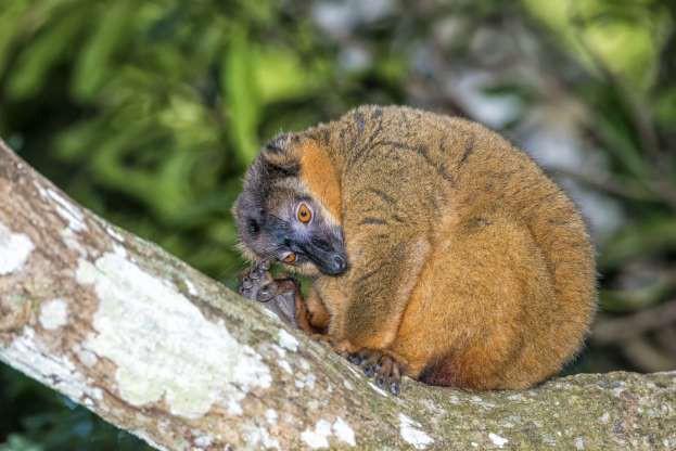 """Madagascar - """"Thiên đường"""" của những loài động vật kỳ lạ - ảnh 15"""