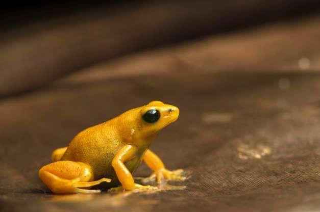"""Madagascar - """"Thiên đường"""" của những loài động vật kỳ lạ - ảnh 5"""