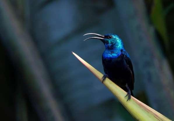 """Madagascar - """"Thiên đường"""" của những loài động vật kỳ lạ - ảnh 6"""