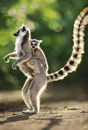 """Madagascar - """"Thiên đường"""" của những loài động vật kỳ lạ - ảnh 7"""