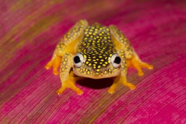 """Madagascar - """"Thiên đường"""" của những loài động vật kỳ lạ - ảnh 8"""