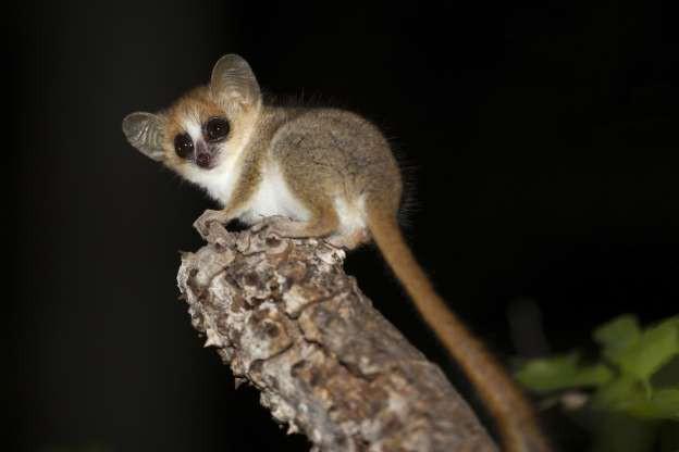 """Madagascar - """"Thiên đường"""" của những loài động vật kỳ lạ - ảnh 10"""