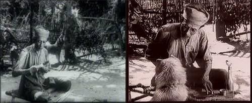 Cần gì Shiba, 39 năm trước từng có một chú chó ta đóng Cậu Vàng với Lão Hạc rất ổn đây này! - Ảnh 2.