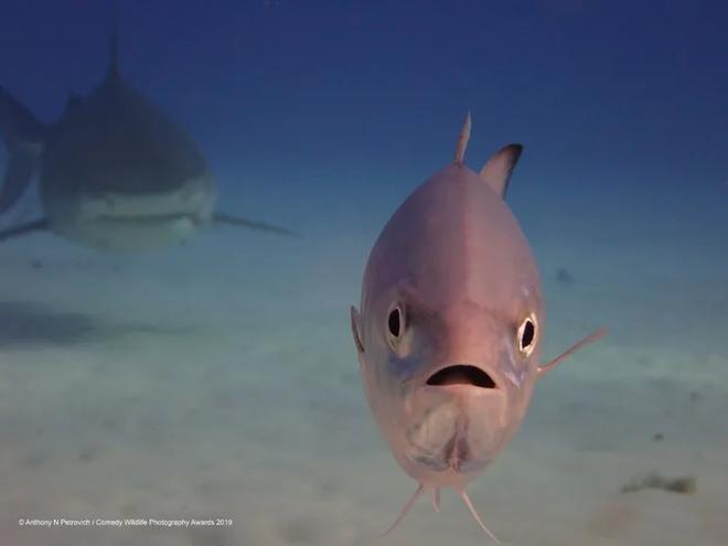 Những bức ảnh siêu hài hước trong chung kết cuộc thi nhiếp ảnh động vật hoang dã Comedy - ảnh 11