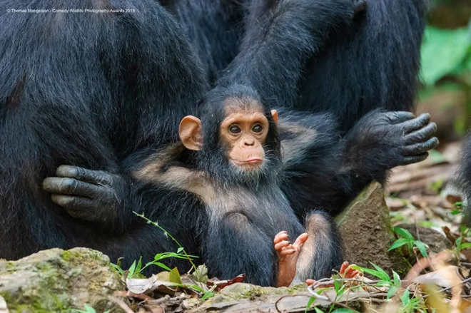Những bức ảnh siêu hài hước trong chung kết cuộc thi nhiếp ảnh động vật hoang dã Comedy - ảnh 15
