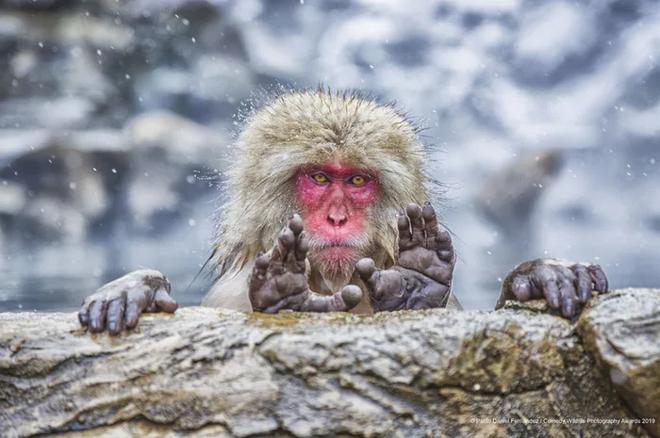 Những bức ảnh siêu hài hước trong chung kết cuộc thi nhiếp ảnh động vật hoang dã Comedy - ảnh 16