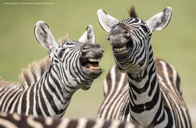 Những bức ảnh siêu hài hước trong chung kết cuộc thi nhiếp ảnh động vật hoang dã Comedy - ảnh 17