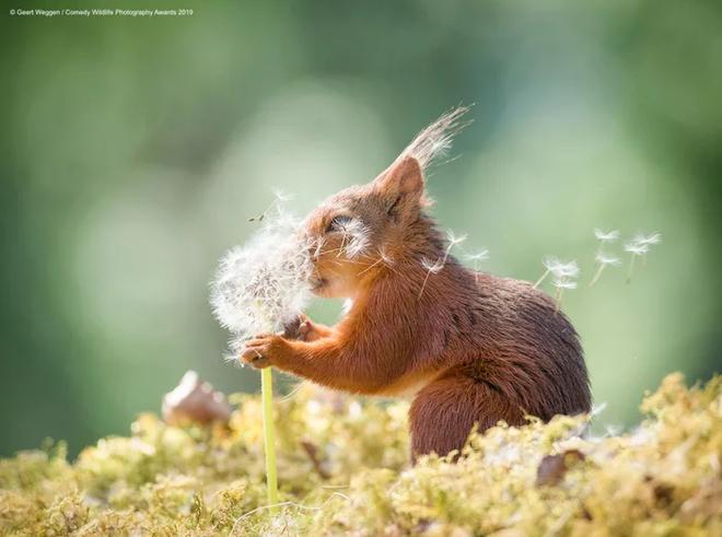Những bức ảnh siêu hài hước trong chung kết cuộc thi nhiếp ảnh động vật hoang dã Comedy - ảnh 18
