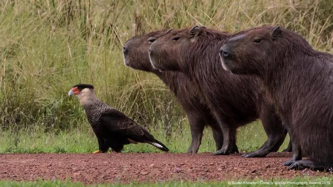 Những bức ảnh siêu hài hước trong chung kết cuộc thi nhiếp ảnh động vật hoang dã Comedy - ảnh 19