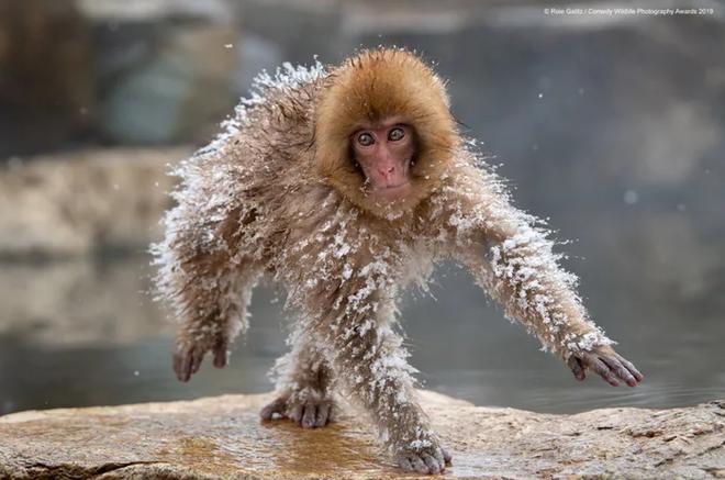 Những bức ảnh siêu hài hước trong chung kết cuộc thi nhiếp ảnh động vật hoang dã Comedy - ảnh 20