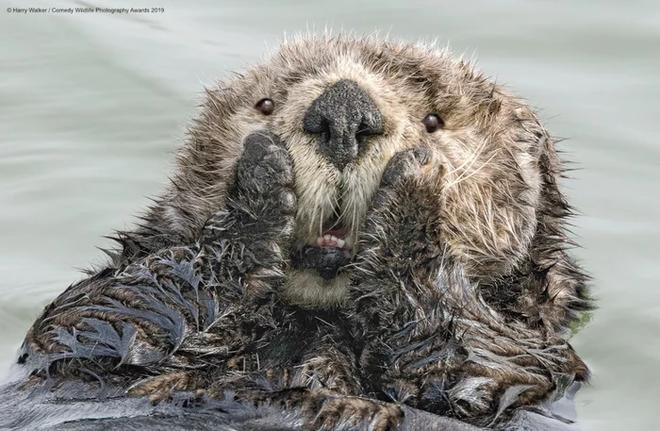 Những bức ảnh siêu hài hước trong chung kết cuộc thi nhiếp ảnh động vật hoang dã Comedy - ảnh 3