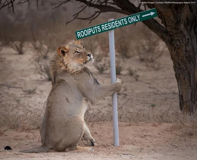 Những bức ảnh siêu hài hước trong chung kết cuộc thi nhiếp ảnh động vật hoang dã Comedy - ảnh 22