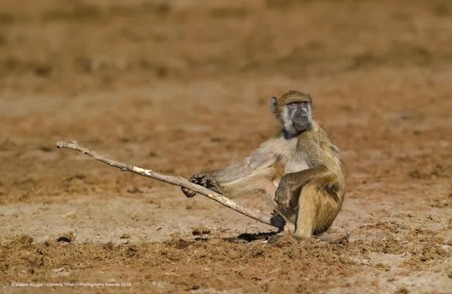 Những bức ảnh siêu hài hước trong chung kết cuộc thi nhiếp ảnh động vật hoang dã Comedy - ảnh 23