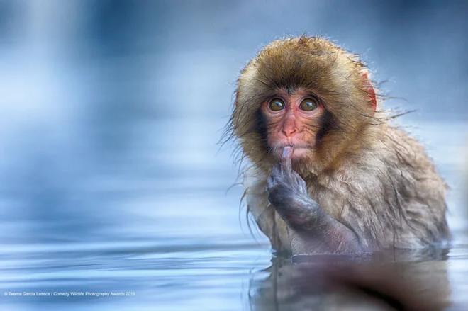 Những bức ảnh siêu hài hước trong chung kết cuộc thi nhiếp ảnh động vật hoang dã Comedy - ảnh 5