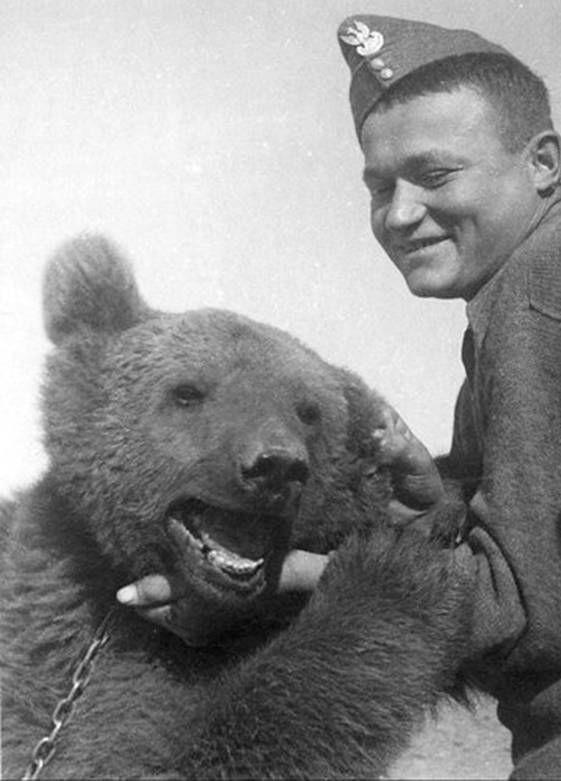 Cuộc đời kì lạ của binh nhì gấu Wojtek: Sống và chiến đấu như người lính thực thụ rồi trở thành anh hùng đáng tự hào của người Ba Lan - ảnh 6