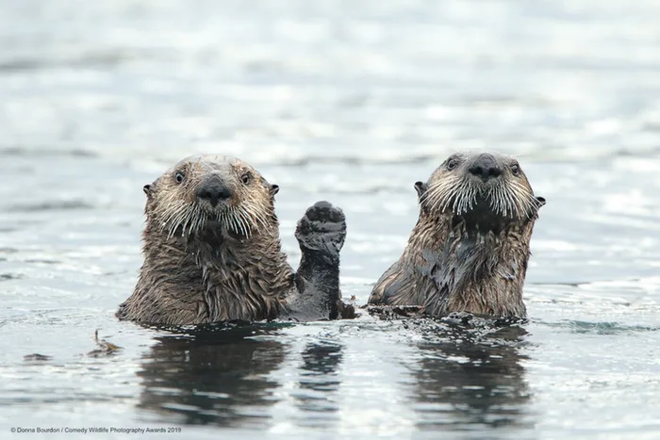 Những bức ảnh siêu hài hước trong chung kết cuộc thi nhiếp ảnh động vật hoang dã Comedy - ảnh 8