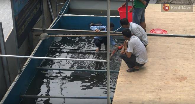 Cá Koi chết sau 2 ngày được thả xuống sông Tô Lịch, bảo vệ túc trực ngày đêm - ảnh 3