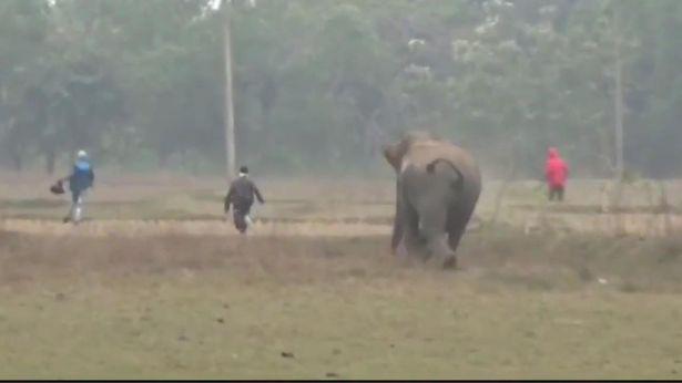 Du khách bỏ chạy thục mạng vì bị voi dữ truy đuổi sau khi cố lại gần chụp ảnh tự sướng với con vật - ảnh 1