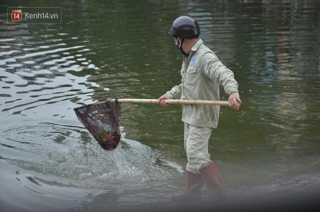 Hà Nội: Cá chép vàng chết nổi khi vừa được thả xuống hồ Hoàng Cầu ngày ông Công ông Táo - ảnh 14