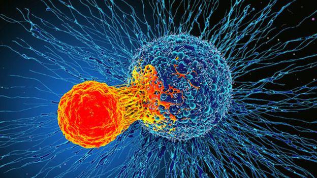 Các nhà khoa học phát hiện ra một tế bào miễn dịch có thể điều trị mọi loại ung thư - ảnh 1