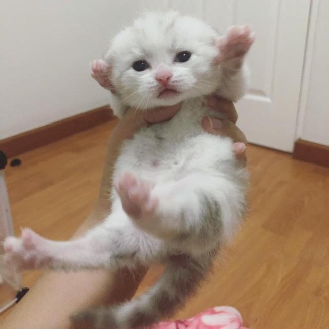 Mới tí tuổi đã có bụng bia, mèo em chã khiến sen lo phát sốt nhưng bác sĩ bảo chỉ bị béo phì thôi - ảnh 3