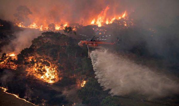 Hết cháy đại thảm họa đến lũ lụt, giờ nước Úc giờ tiếp tục phải hứng chịu cơn mưa nhện độc nguy hiểm nhất hành tinh - ảnh 1