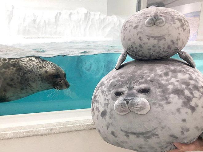 Chiếc gối ôm thương hiệu hải cẩu béo ú này đang làm mưa làm gió trên Internet vì độ mập mạp và dễ cưng của mình - ảnh 6