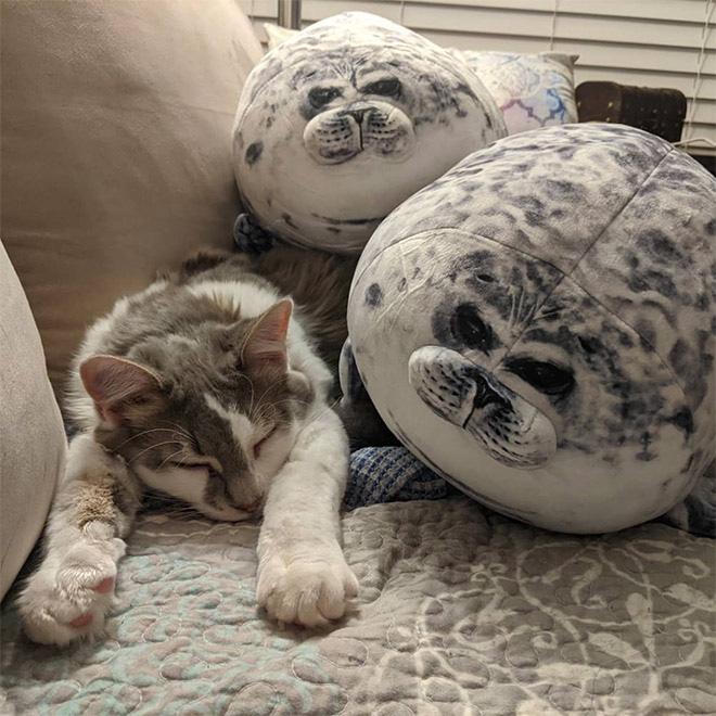 Chiếc gối ôm thương hiệu hải cẩu béo ú này đang làm mưa làm gió trên Internet vì độ mập mạp và dễ cưng của mình - ảnh 11