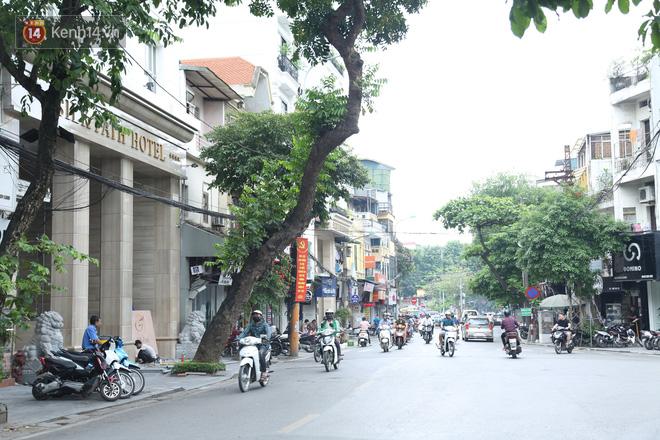 Ảnh: Cận cảnh hàng loạt cây xanh mục gốc, ngả hướng ra giữa đường ở Hà Nội - Ảnh 4.